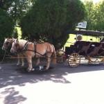 hamptonlexington-carriage